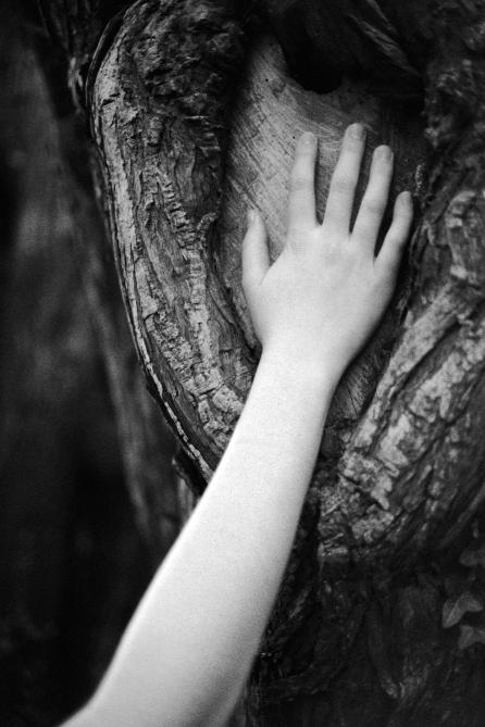 treehandbw