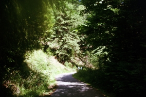 headwaters forest
