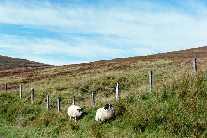 scotlandireland (15 of 70)